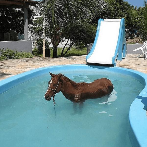Ein Pferd steht in einem Swimming Pool.