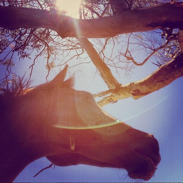 Ein Pferd sucht unter einem Baum Schutz vor der Mittagssonne.