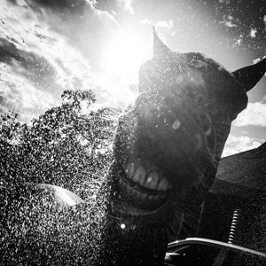 Lachendes Pferd mit Wasserspritzern