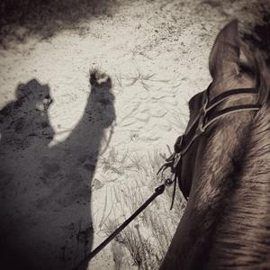 Ein Pferd betrachtet seinen eigenen Schatten