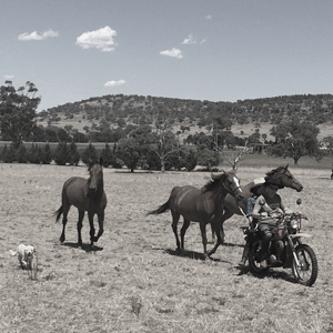 Drei Pferde galoppieren hinter einem Motorrad her